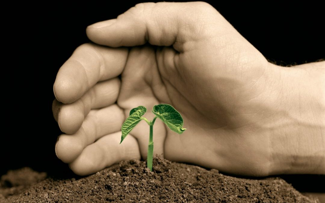 Discovering Fertile Territory for Vendor Finance Business Growth
